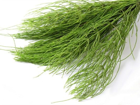 Horsetail Herb in Hair La Vie